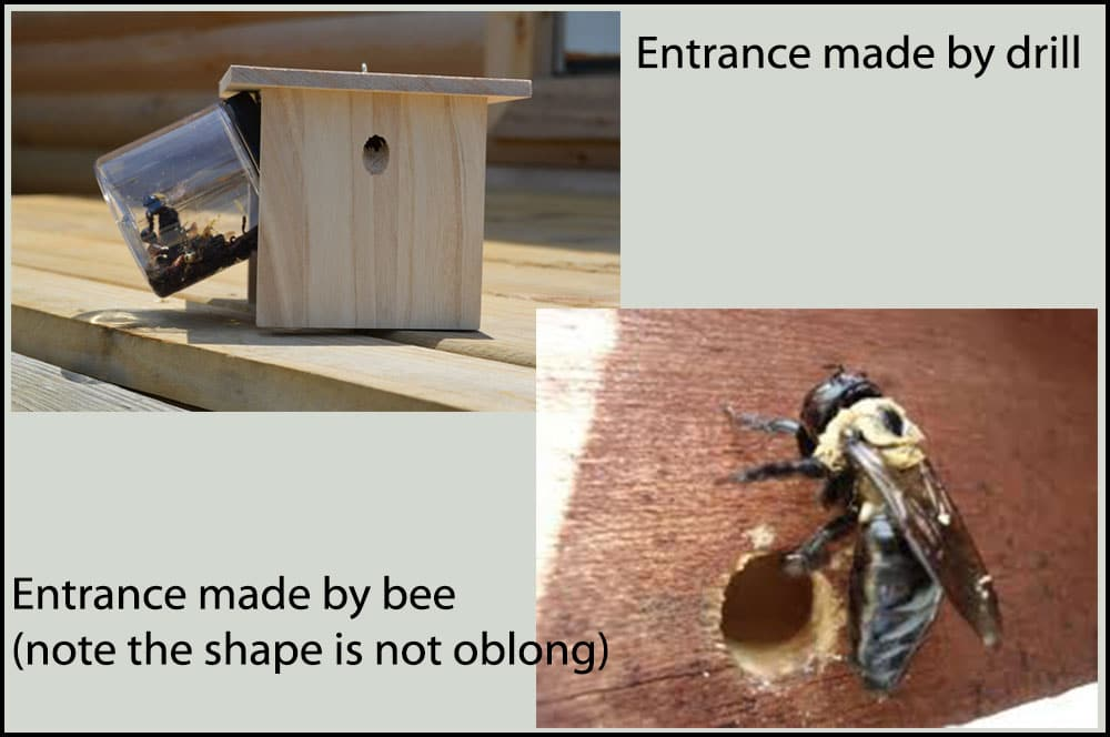 bee-trap-hole-examples